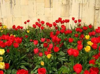 自然に美しい花