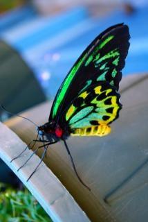 蝶クローズアップクローズアップ