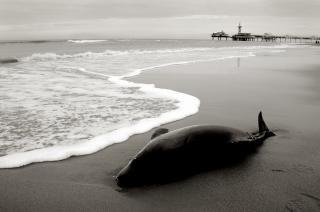 イルカは岸に洗浄