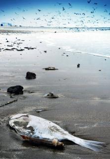 死んだ魚は岸に洗浄