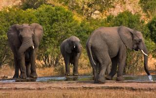クルーガー国立公園の象の旅