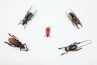 甲虫ミックスオレンジ