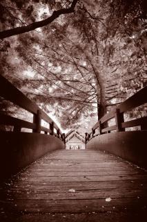セピア色の橋の紅葉