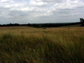 ミズーリ州の牧草地