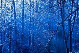 雪の森に覆われた木