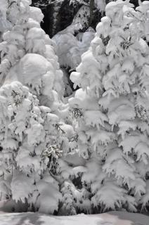 雪の風景の中に木