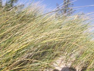 Дюны трав