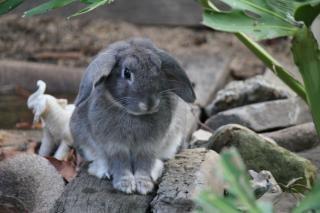 ウサギのログ