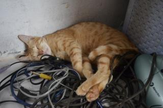 ケーブルの上に猫