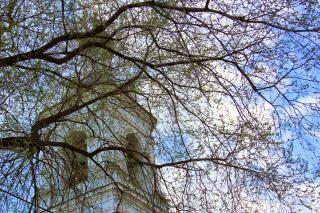 大聖堂や枝