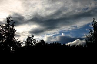 曇り空に対する木