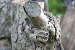 Дерево единовременной