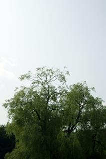 青い空を背景に緑の木