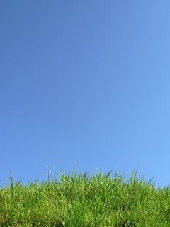 明確な空を背景に緑の芝生