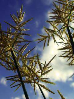 空を背景に植物