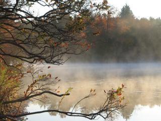 霧の深い朝湖