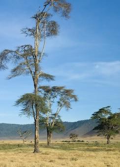 Вид на кратер нгоронгоро, танзания