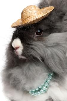 白い背景の前で真珠と麦わら帽子を身に着けている英語のアンゴラウサギのクローズアップ