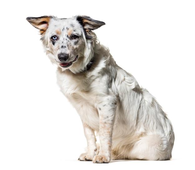 Смешанная собака сидит на белом фоне