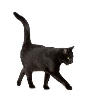 分離された黒猫