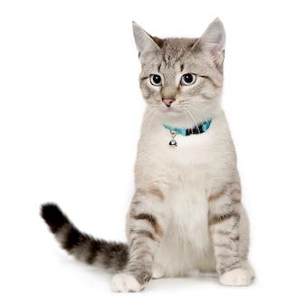 分離された雑種または雑種猫の肖像画