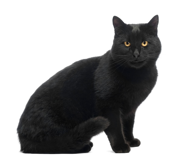 座っている、笑顔、探している黒猫の分離