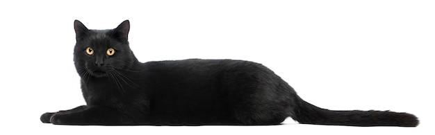 横になっていると見て、分離された黒猫