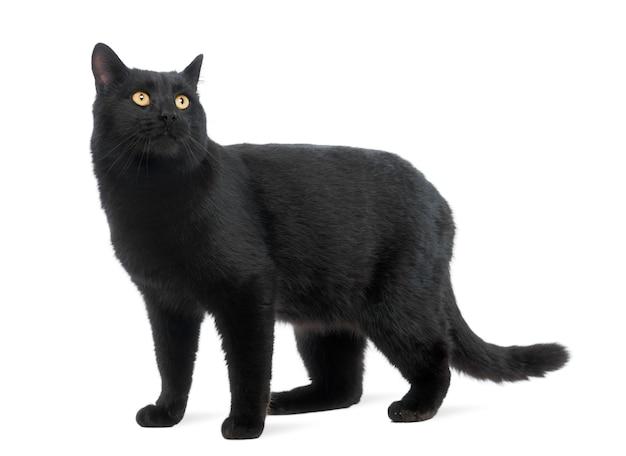 立っている黒猫と離れて見て、分離