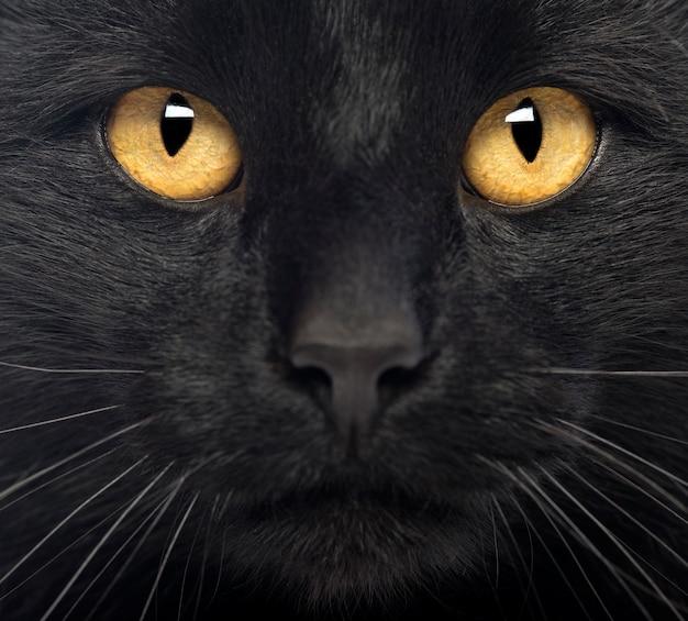 黒猫のクローズアップ