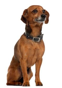座っている混合品種の犬