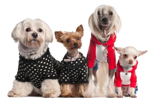 Четыре собаки одеты