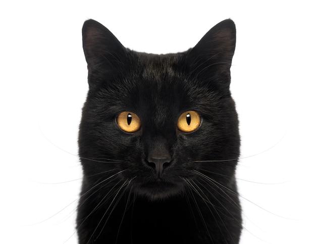 白で隔離され、カメラを見て黒い猫のクローズアップ