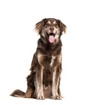 混合品種の犬に座ってあえぎ、分離