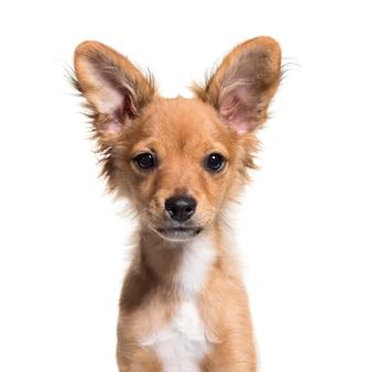 分離された若い雑種犬のクローズアップ