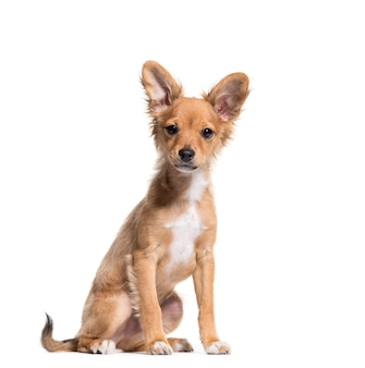 座っている茶色の雑種犬
