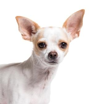 切り取られた混合品種の犬のクローズアップ