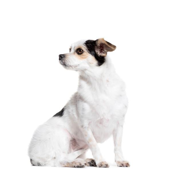離れて座っている雑種犬