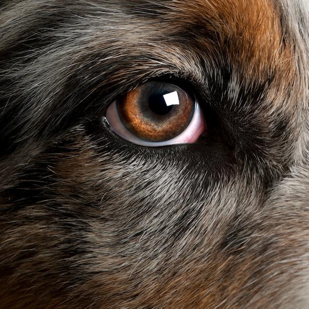 犬の目にクローズアップ