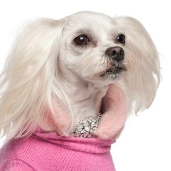 白い背景に対して雑種犬