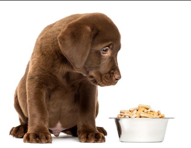 彼の完全な犬のボウルで座っているラブラドールレトリバーの子犬