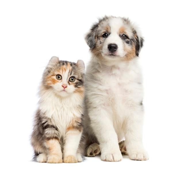 Усаживание котенка и щенка изолированное на белизне
