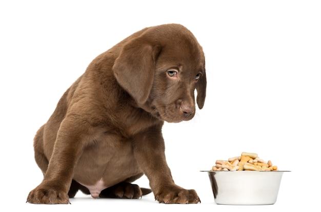 完全な犬のボウルで座っているラブラドールレトリバーの子犬