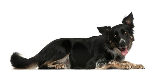横たわっている雑種犬