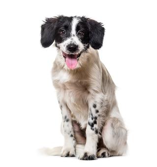 混合品種の犬が喘ぐ