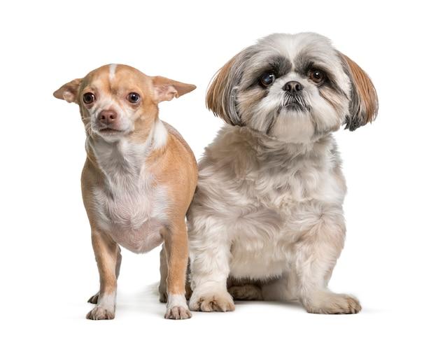 Собаки сидят вместе