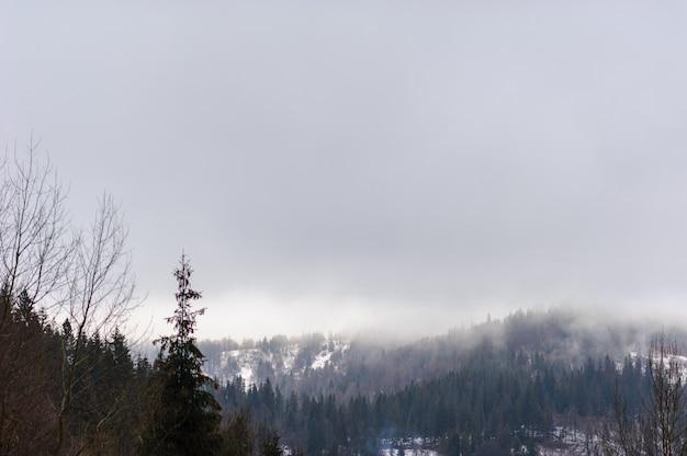 冬の森は雪に覆われました。霧の天気。視認性が悪い。