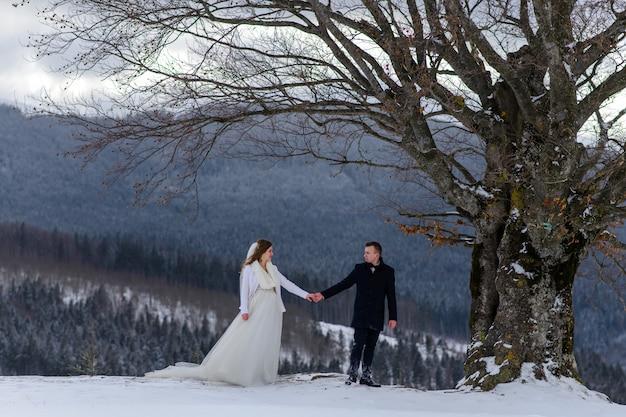 新郎は彼の花嫁を手で孤独な古いブナに導きます。冬の結婚式。ロゴのための場所。