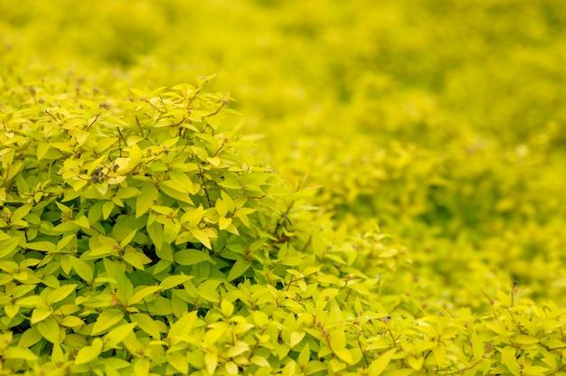 Естественный фон с желтыми листьями.