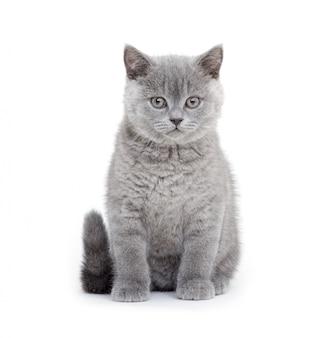 Маленький серый котенок