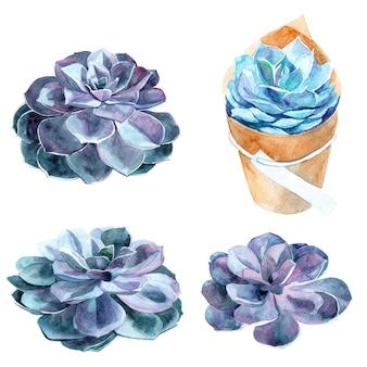 多肉植物のデザインの手描き水彩要素を設定します。